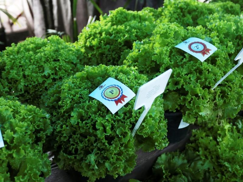 Img: Pavilhão Agrícola expõe os melhores produtos de hortifruti da região do Alto Tietê