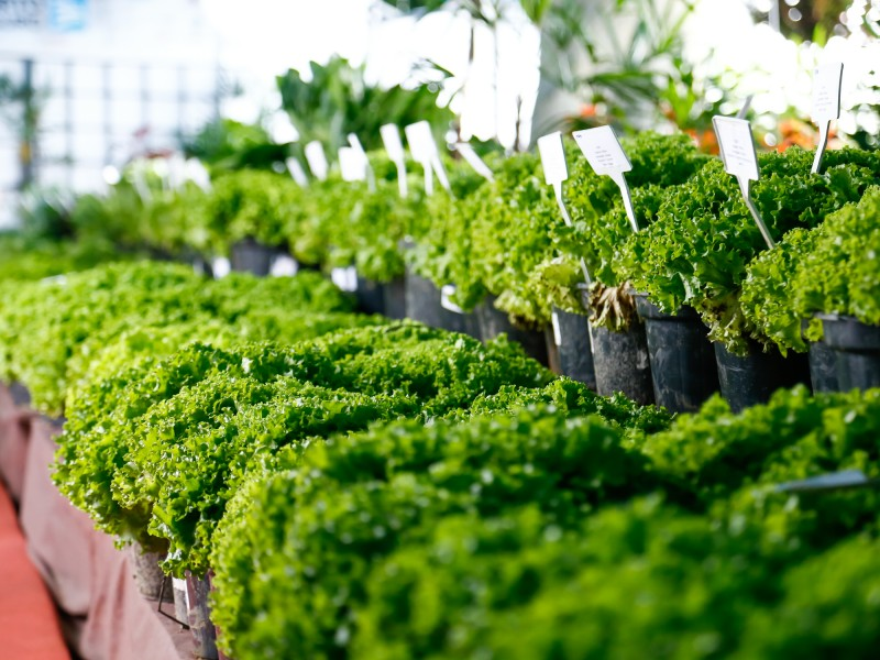 Img: Hortifrutis expostos no Akimatsuri são doados a instituições beneficentes
